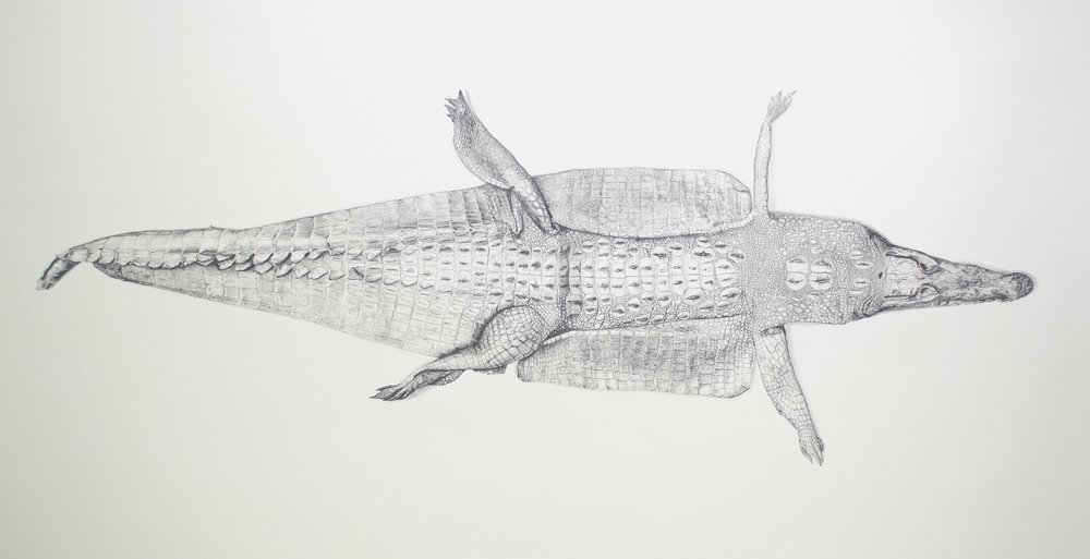"M. L. Leddy's Gator Boots   36"" x 72""  Graphite on paper  2017"