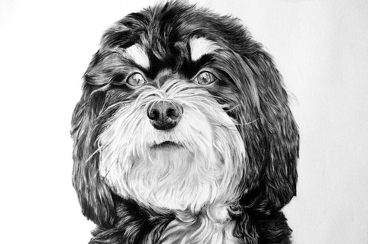 Pet Portraits Fine Art