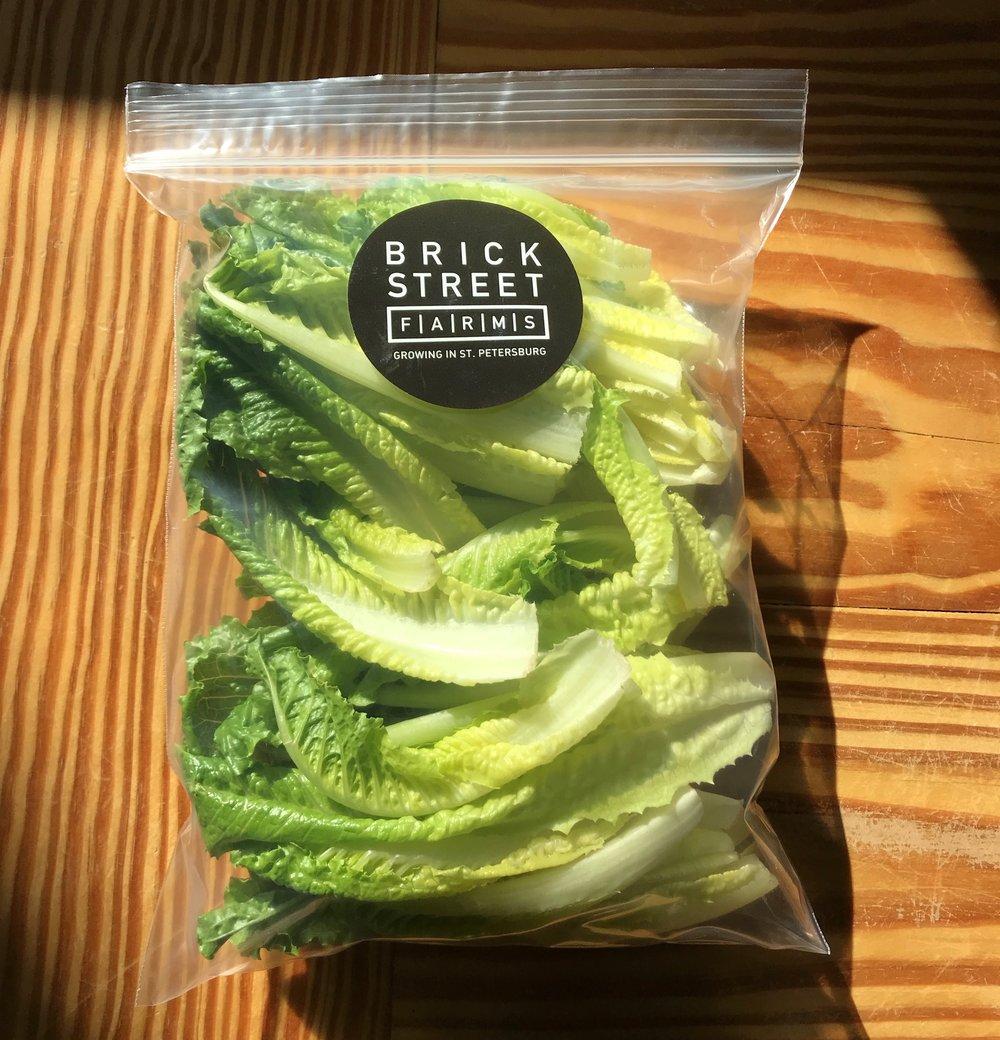 lettucebag.jpg
