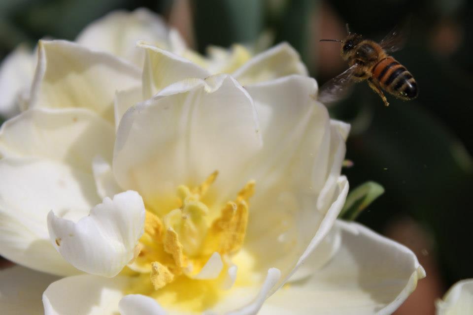 Global Desire Bee .jpg