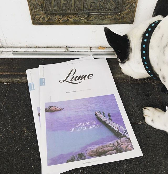 Issue 12 - Dog approved. #lumemag
