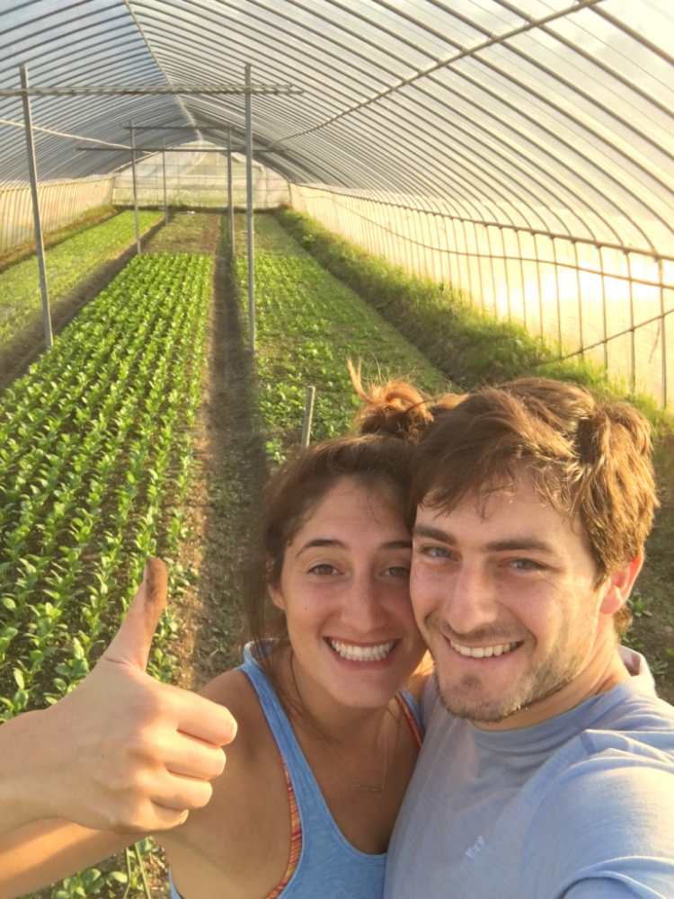 Weeding in the greenhouse