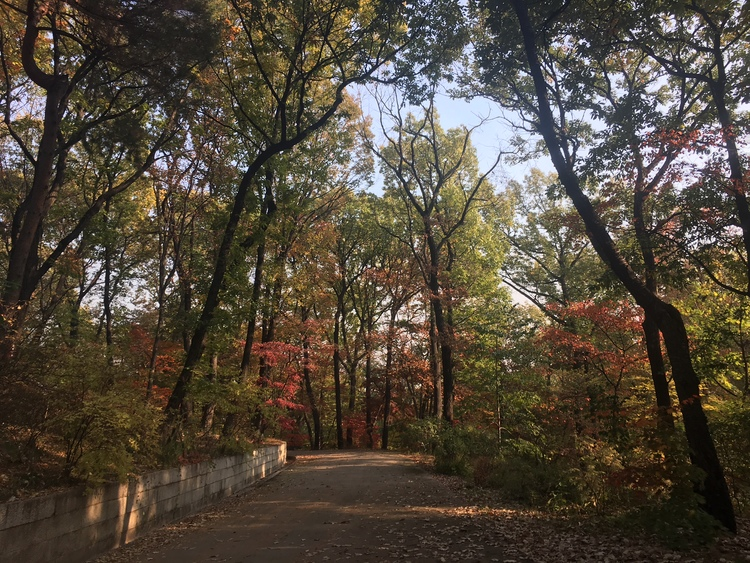 Image result for secret garden changdeokgung