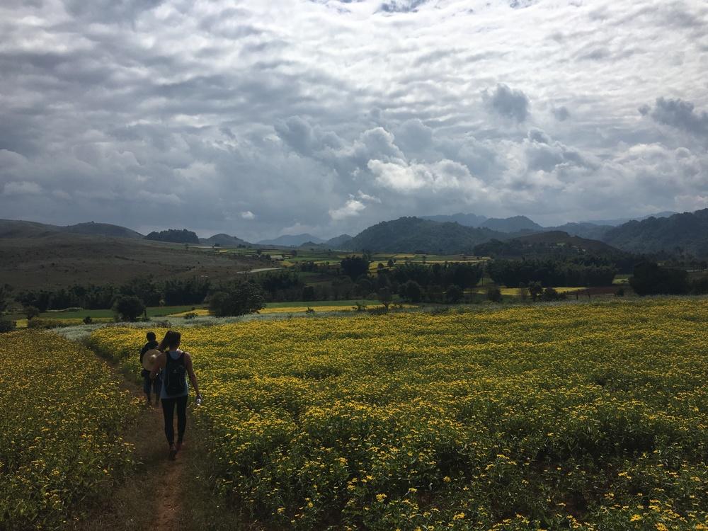 More walking through farms
