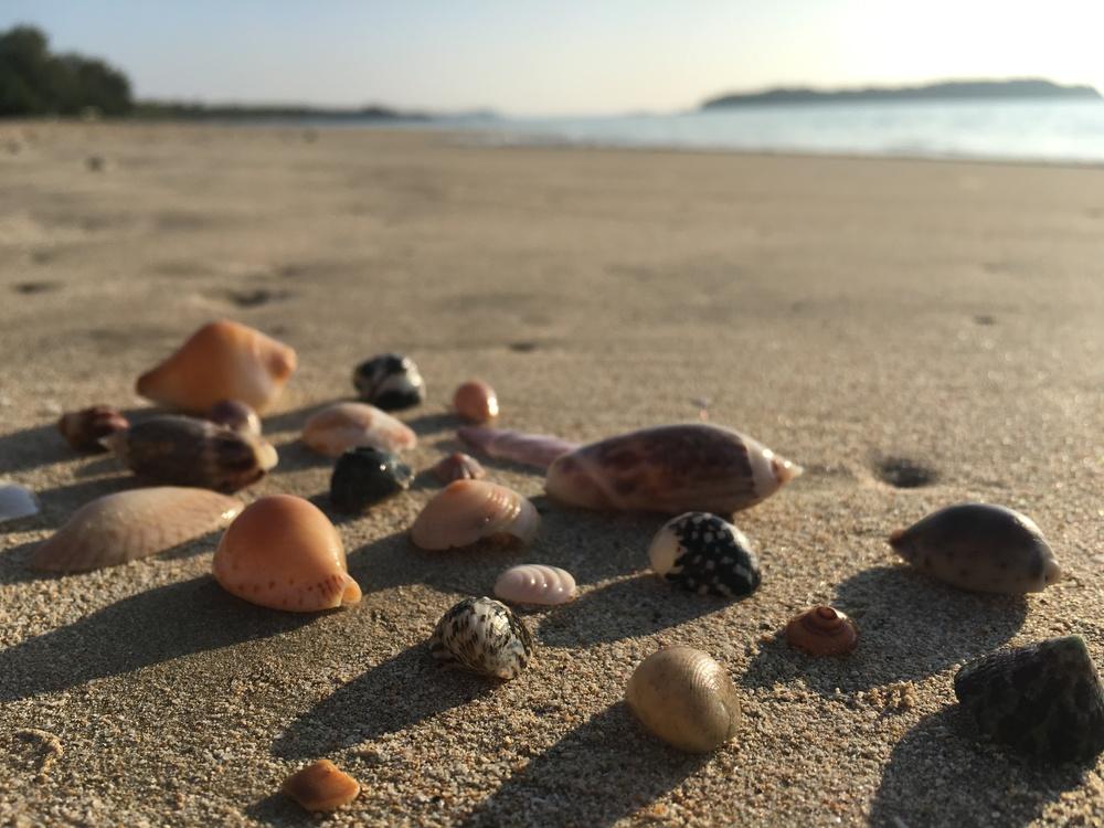 Alex's shell still life