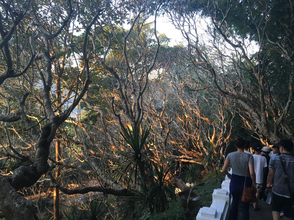 Mount Phousi trees