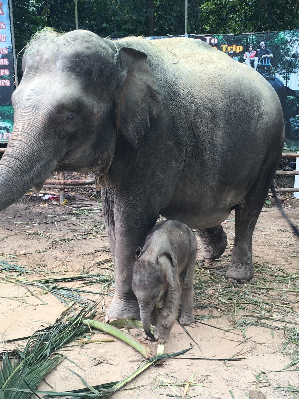 Poor elephants