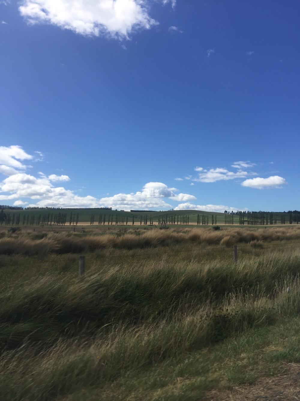 Drive back to Dunedin