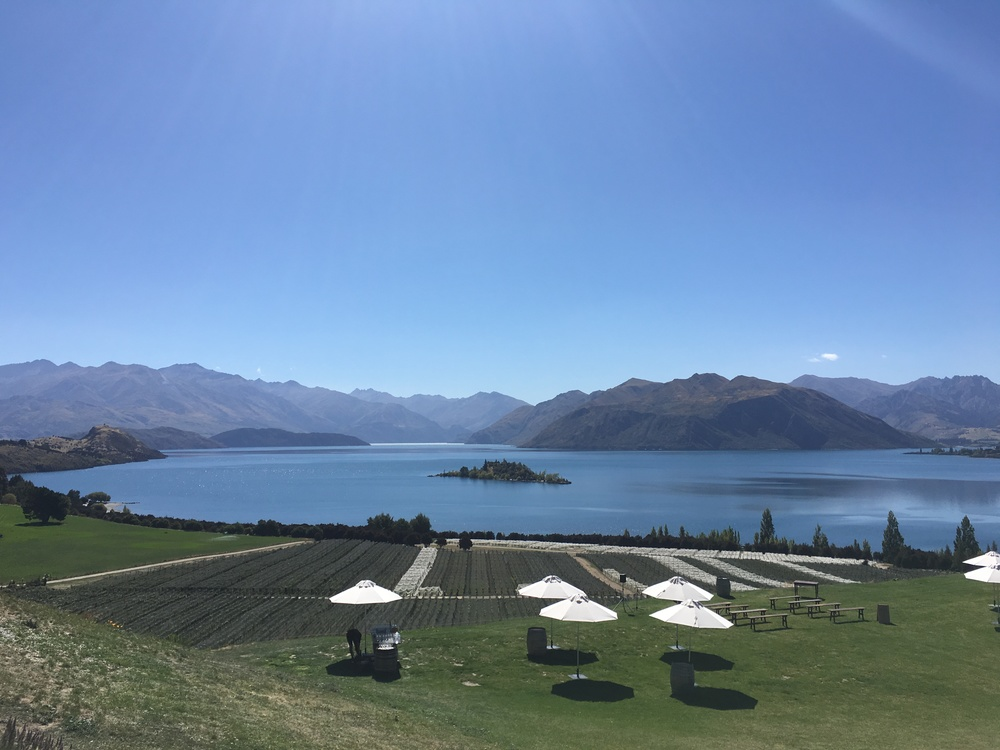 Stunning view at Rippon Winery