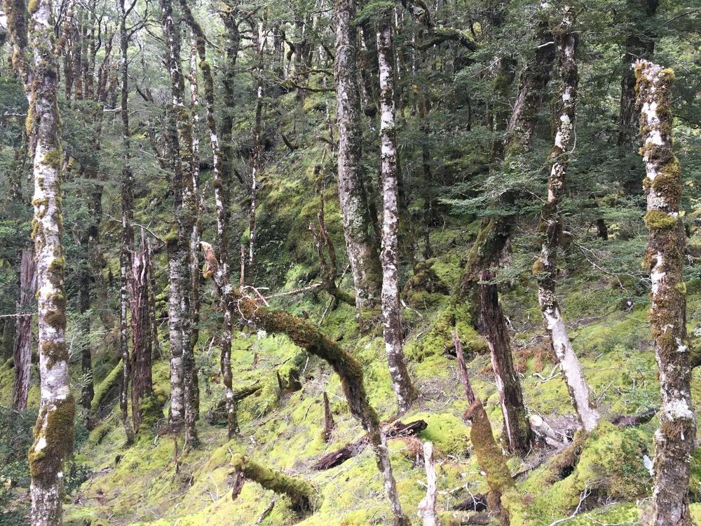 Haast Pass Hike