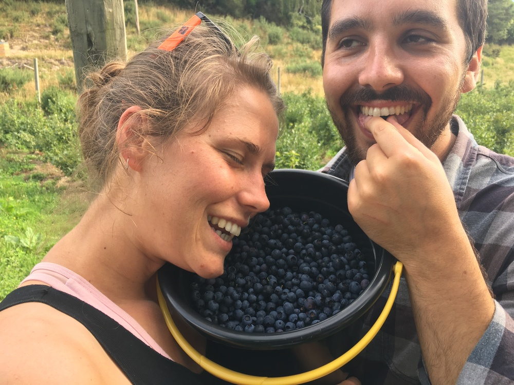 Blueberry Bliss!