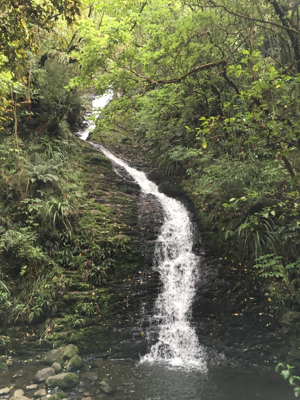 Dunedin running trail surprise