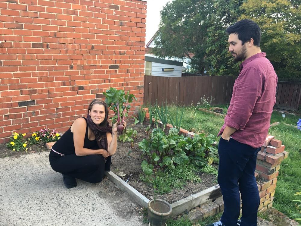 Harvesting beets from Alex + Annabeth's garden