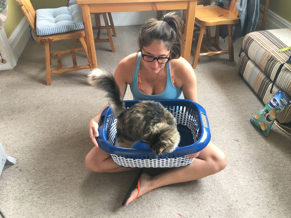 Cat in the laundry basket