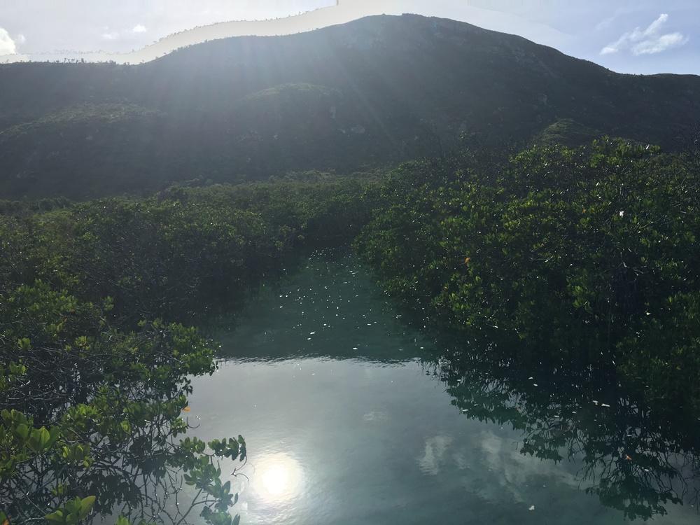 Lizard Island mangroves