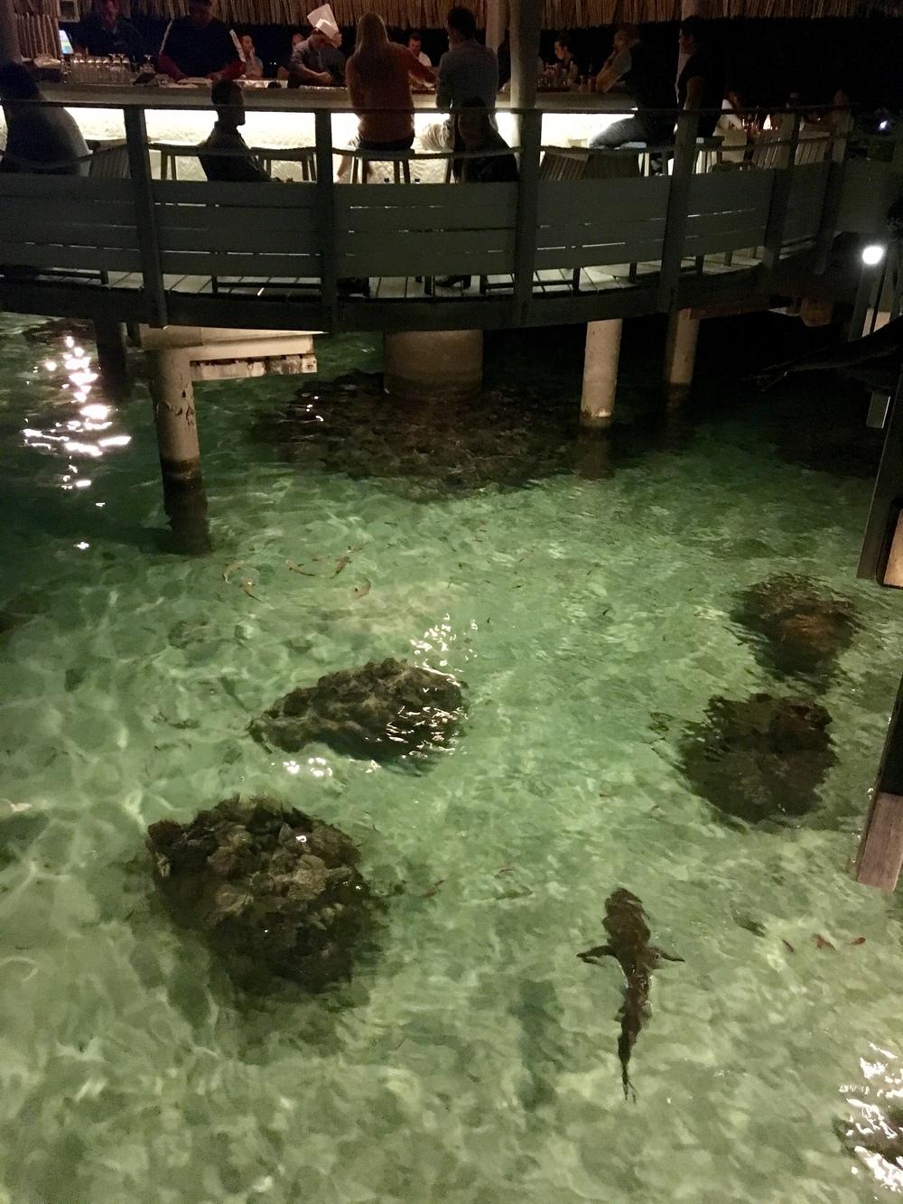 Dinner w the sharks