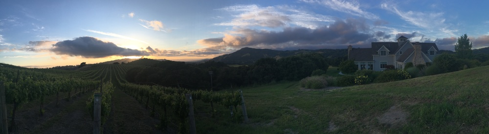 Vineyard views