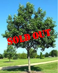Tree - $2500<br />Quantity Available:  0