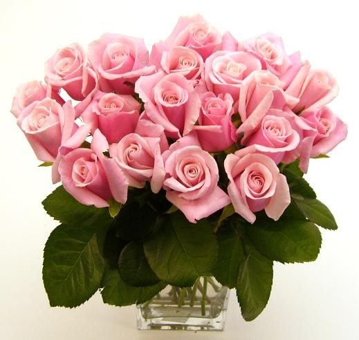 valentine-pink-roses.jpg