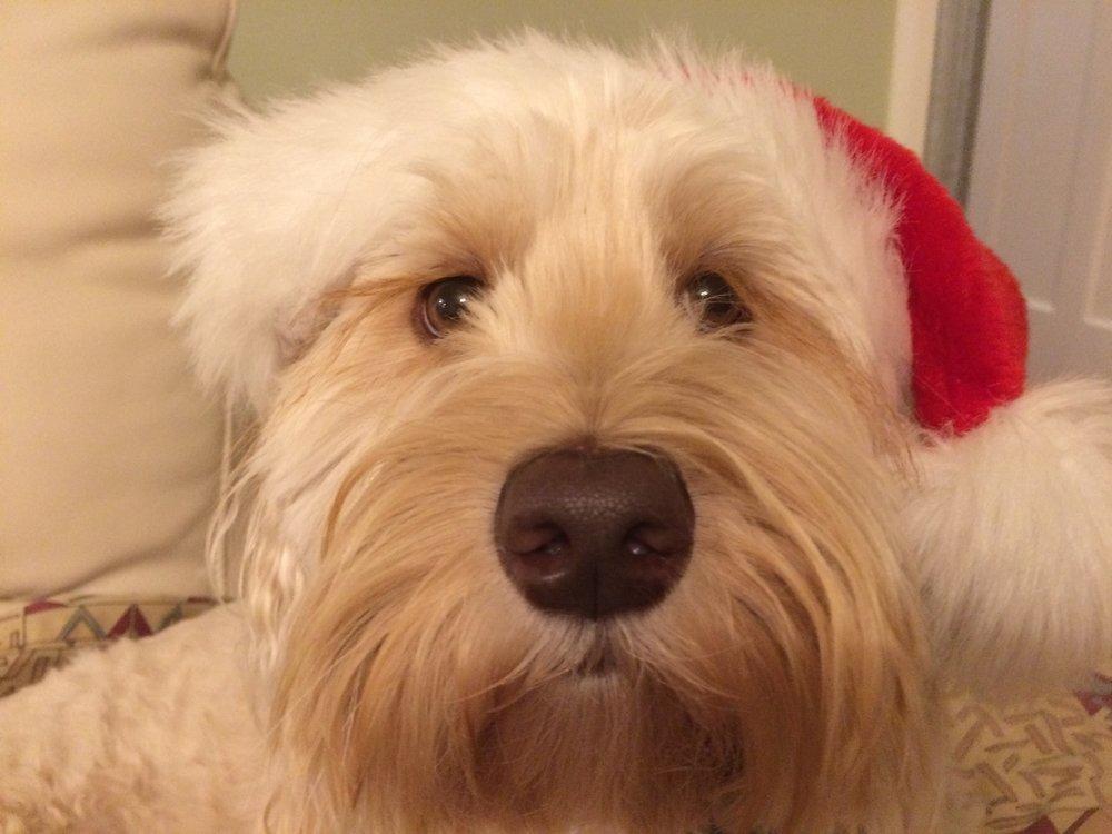 Christmas 2017 Rosie.jpg