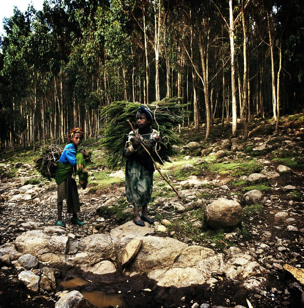 Ethiopia, Chimbiri, Nr. Debre Birhan, Highlands