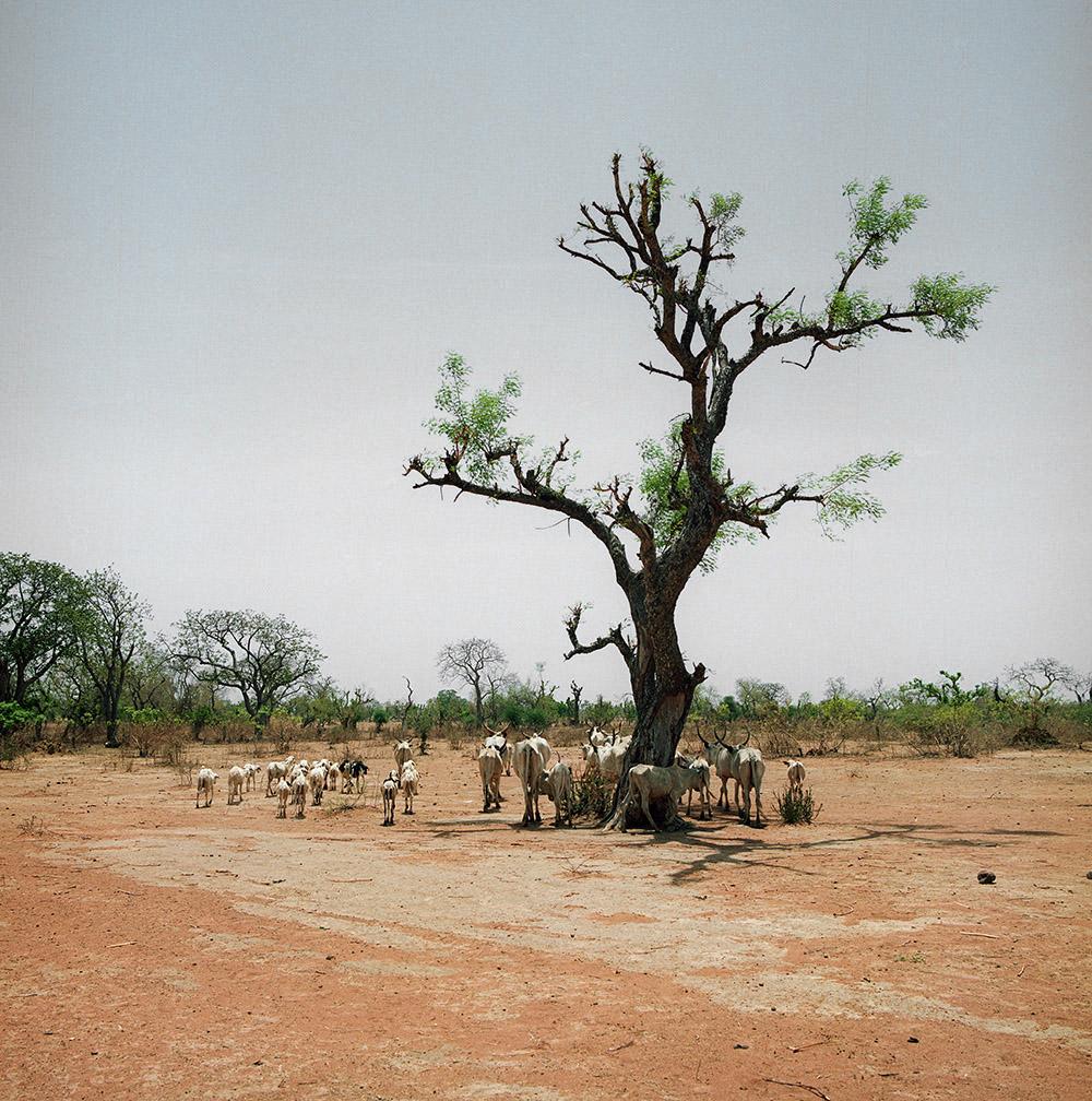 Nigeria_BH_Yola lr 028.jpg