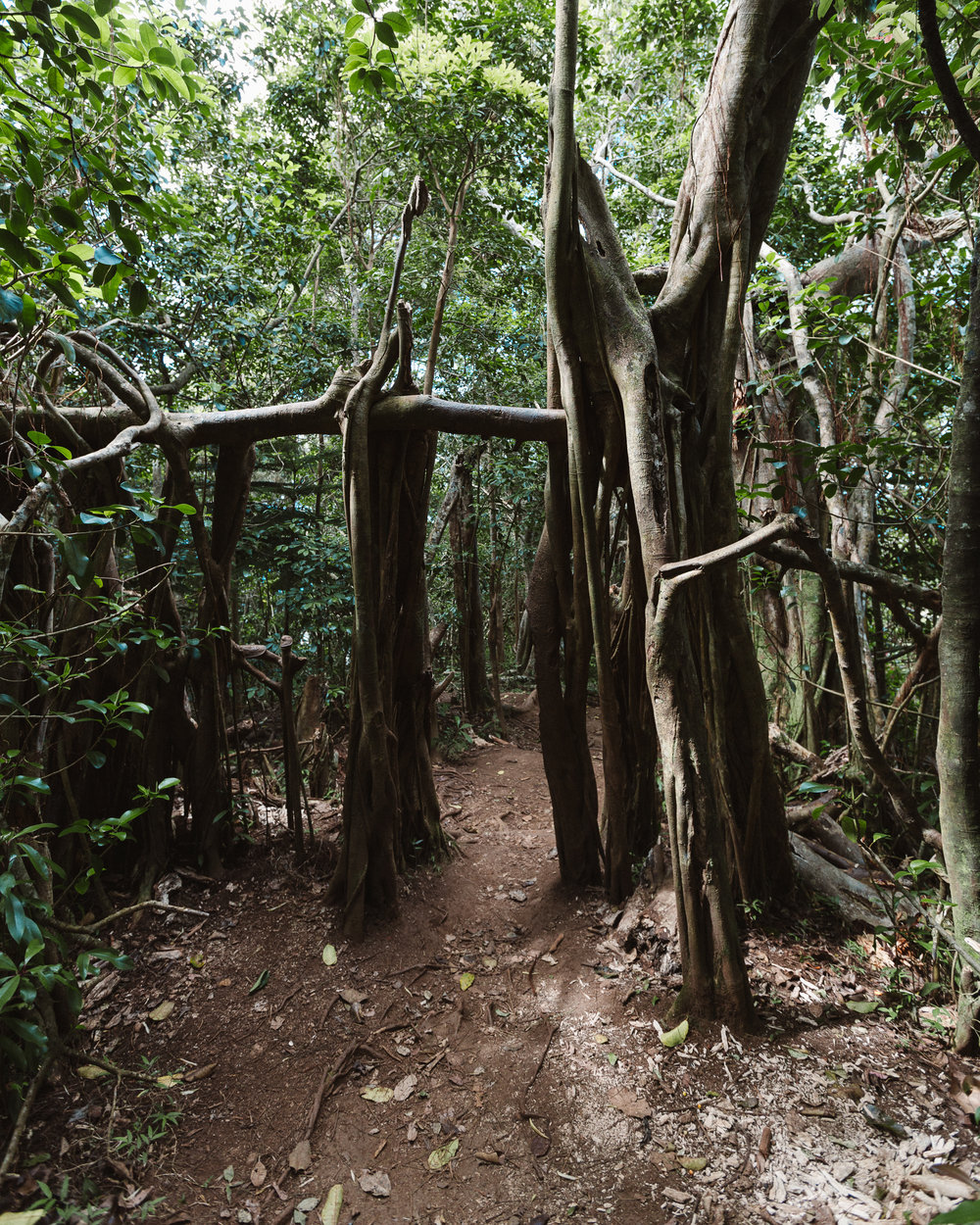 One of my favourite features of the trail: a doorway made of tree roots.