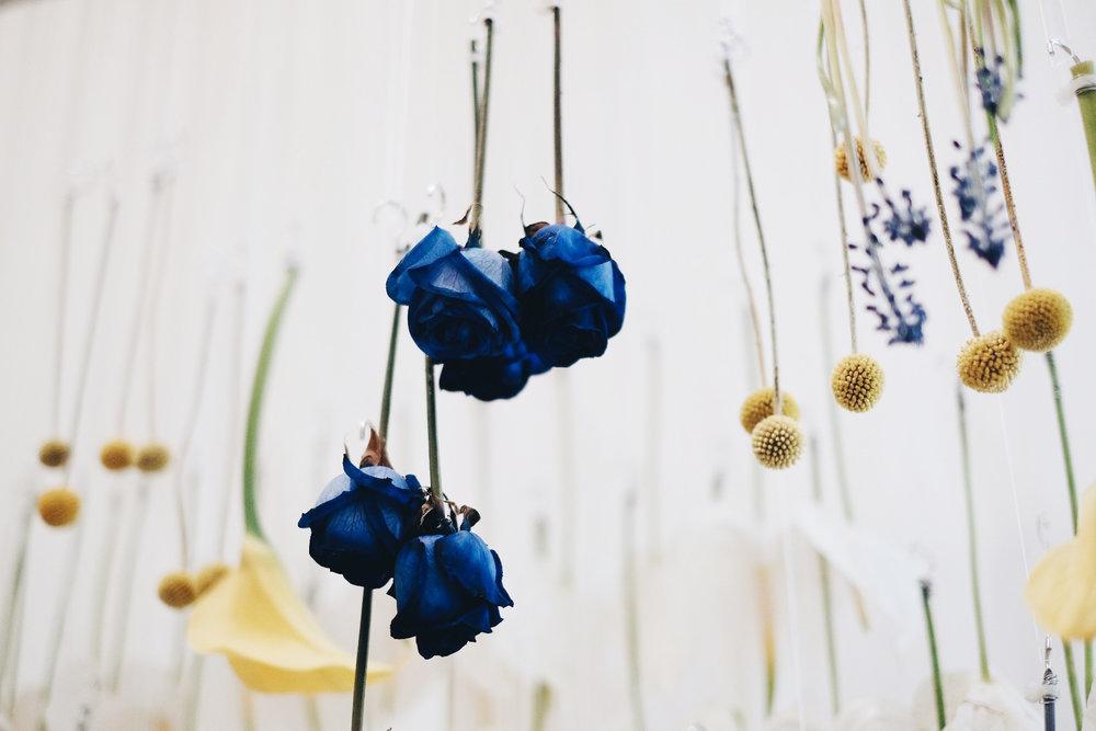 Blooming Tune_02.jpg