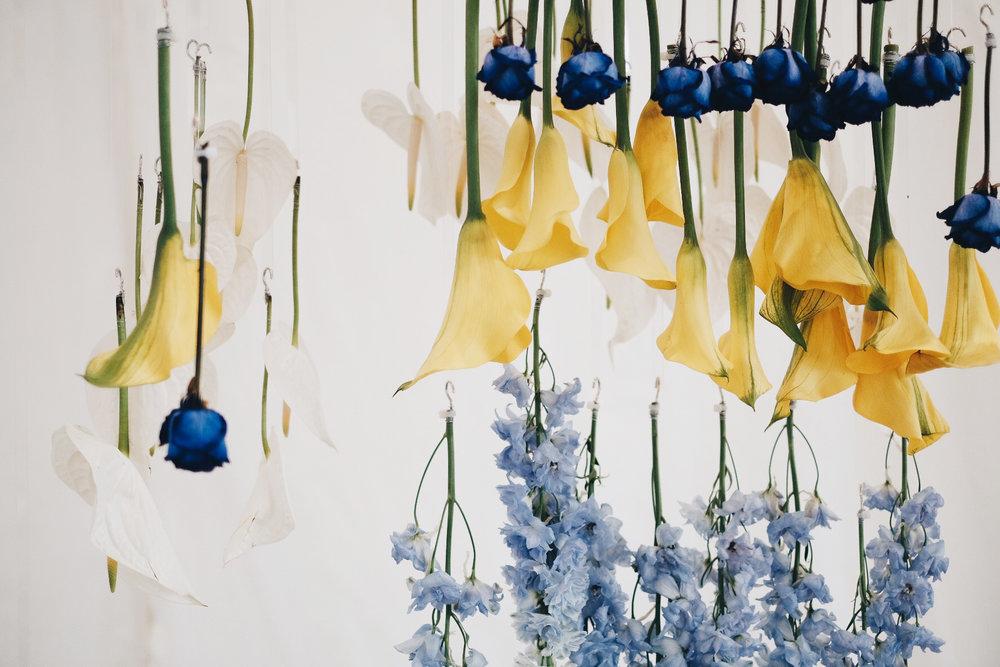 Blooming Tune_05.jpg
