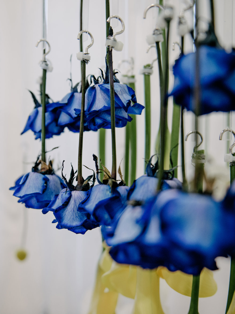 Blooming Tune_09.jpg