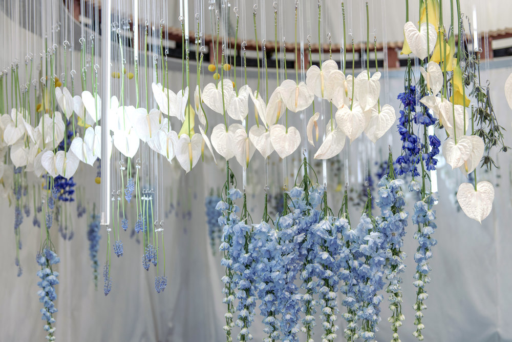 Blooming Tune_11.jpg