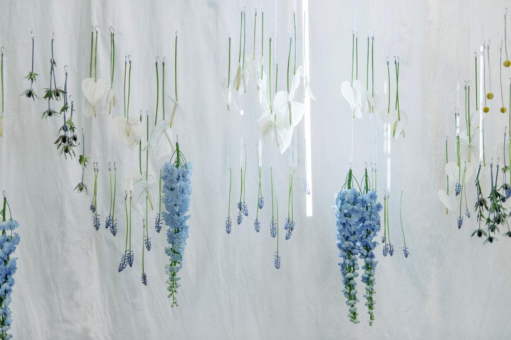 Blooming Tune_12.jpg