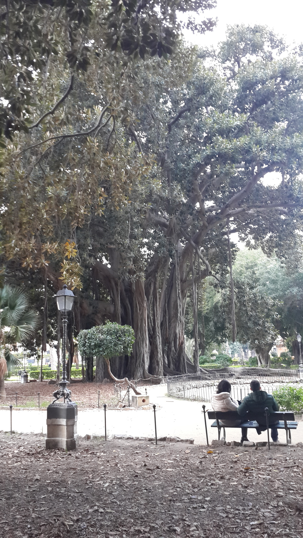Giardino Garibaldi with huge Banyan trees