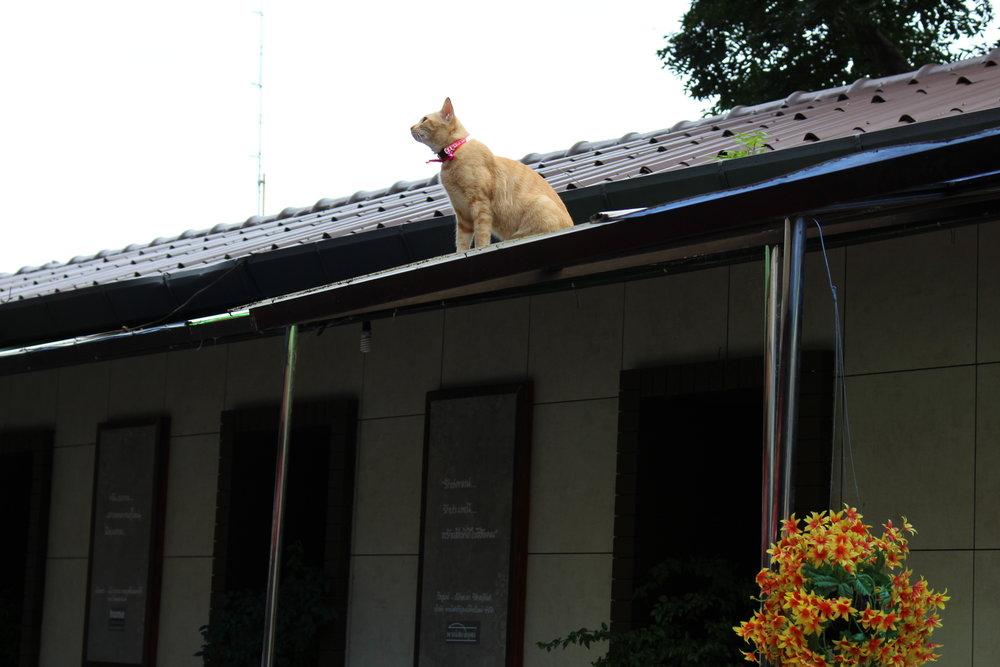 A feline deity waiting for adoration