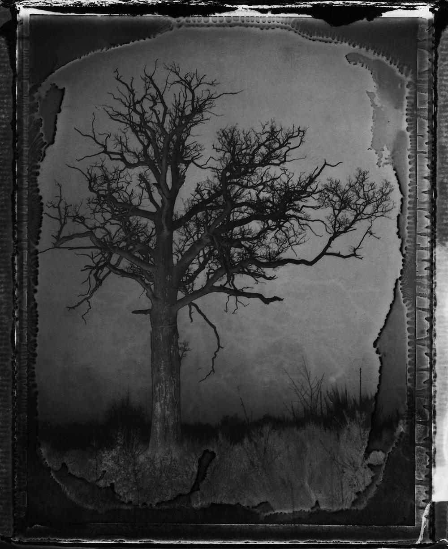 Pola-arbre 2.jpg
