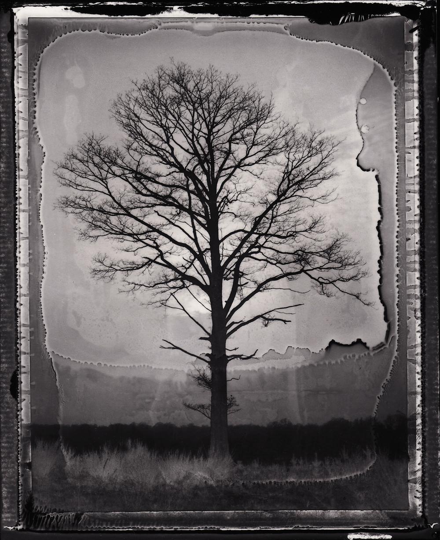 Pola-arbre 4.jpg