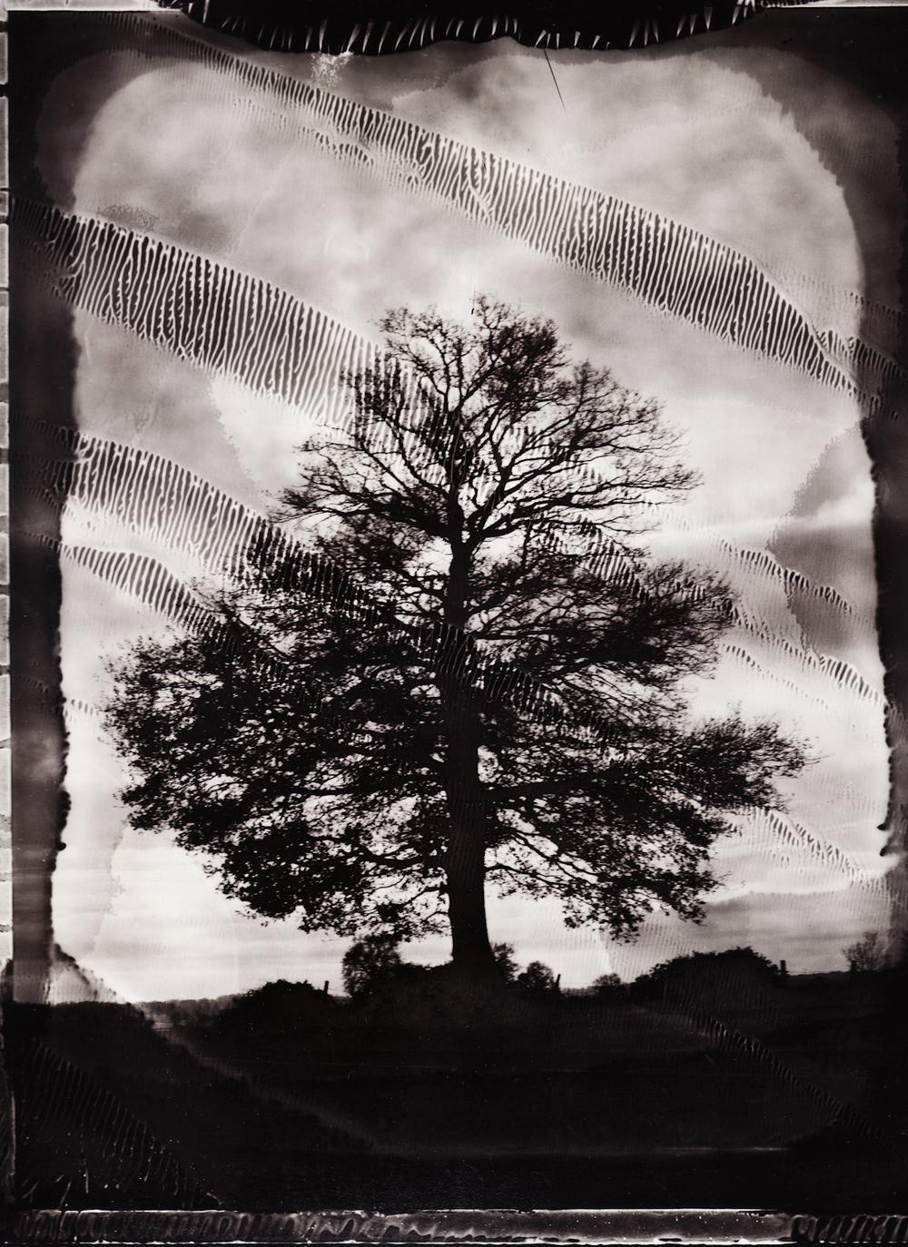 Pola-arbre 3.jpg