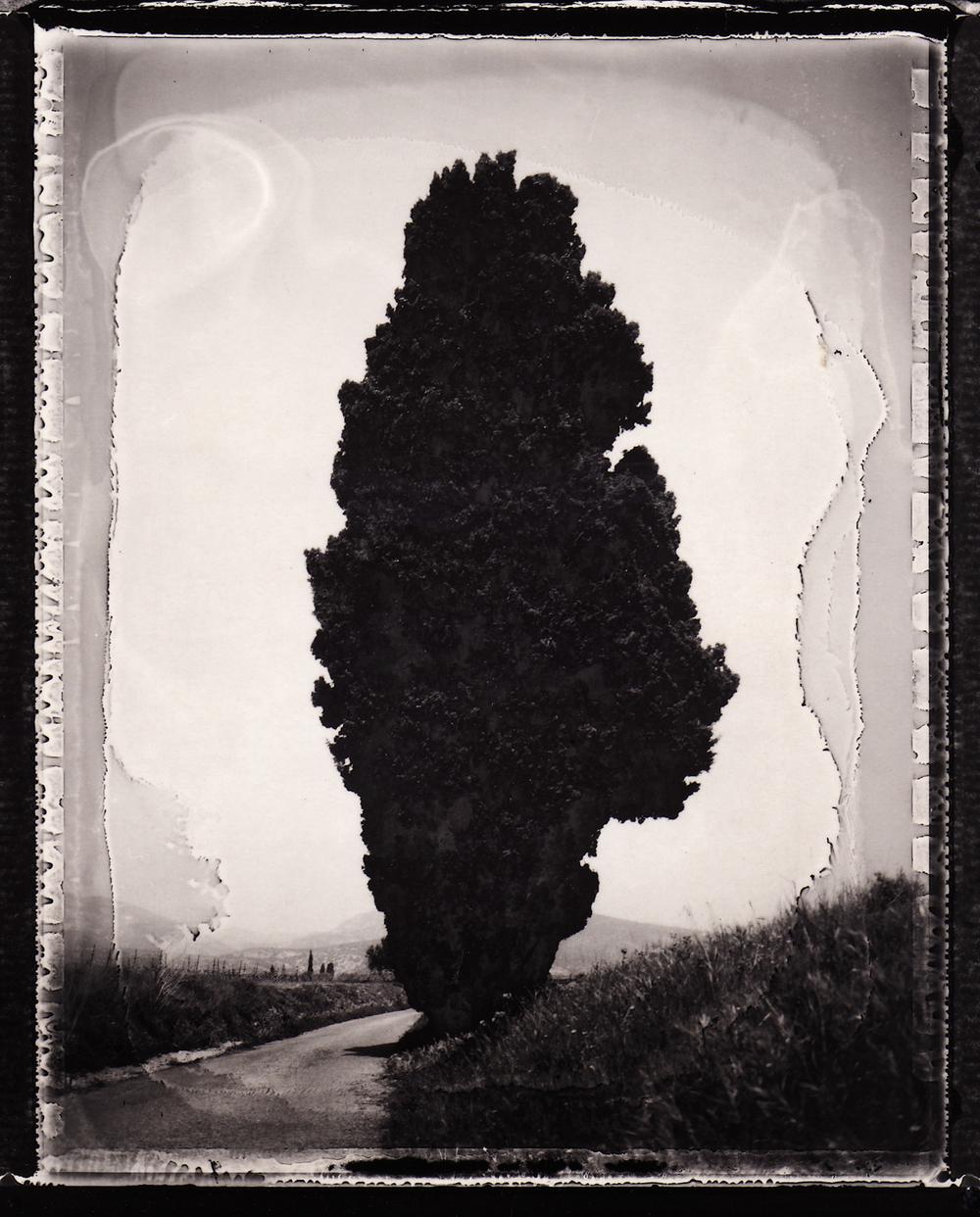 Pola-arbre 5.jpg