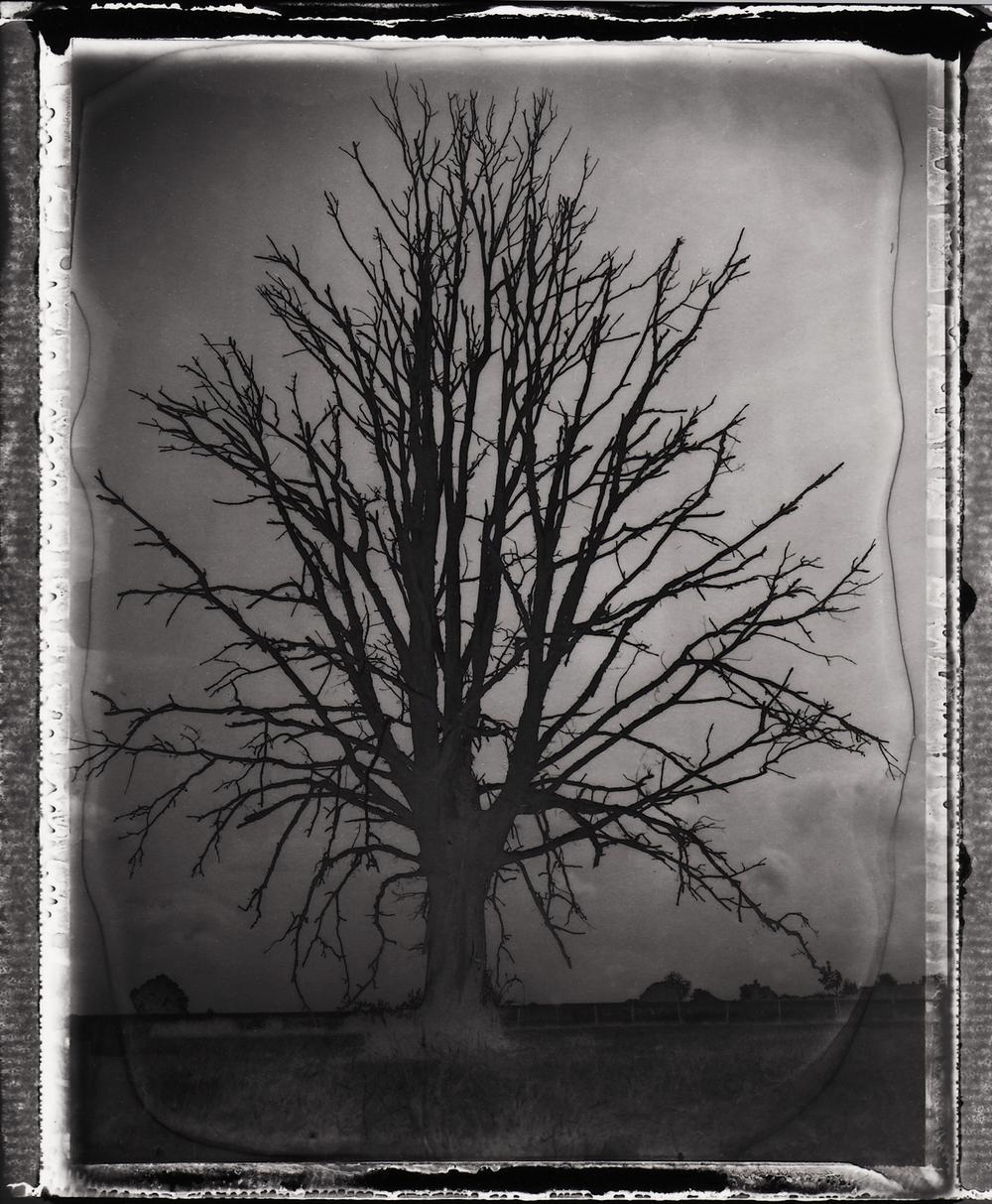 Pola-arbre 6.jpg