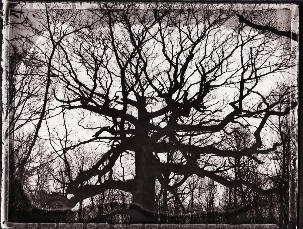 Pola-arbre 8.jpg