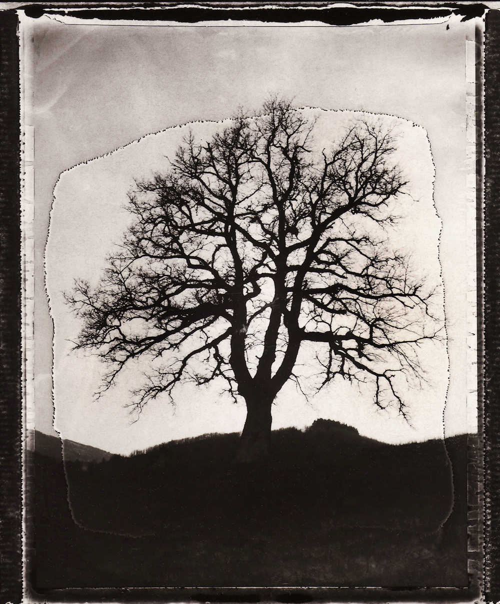 Pola-arbre 10.jpg