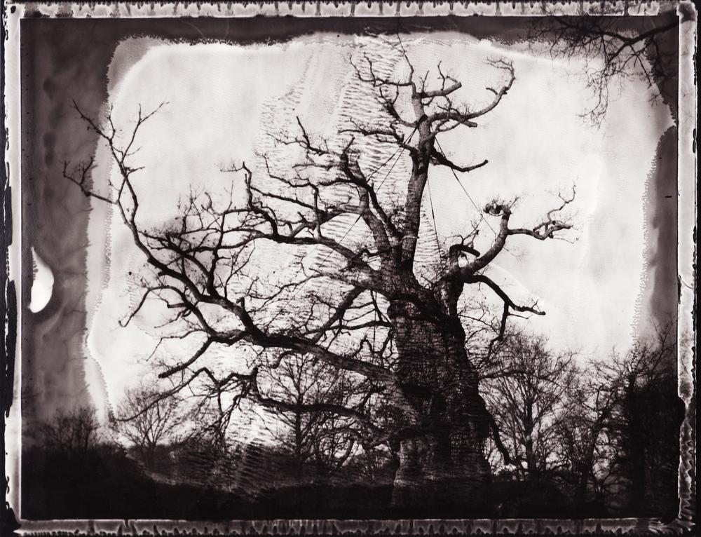 Pola-arbre 11.jpg