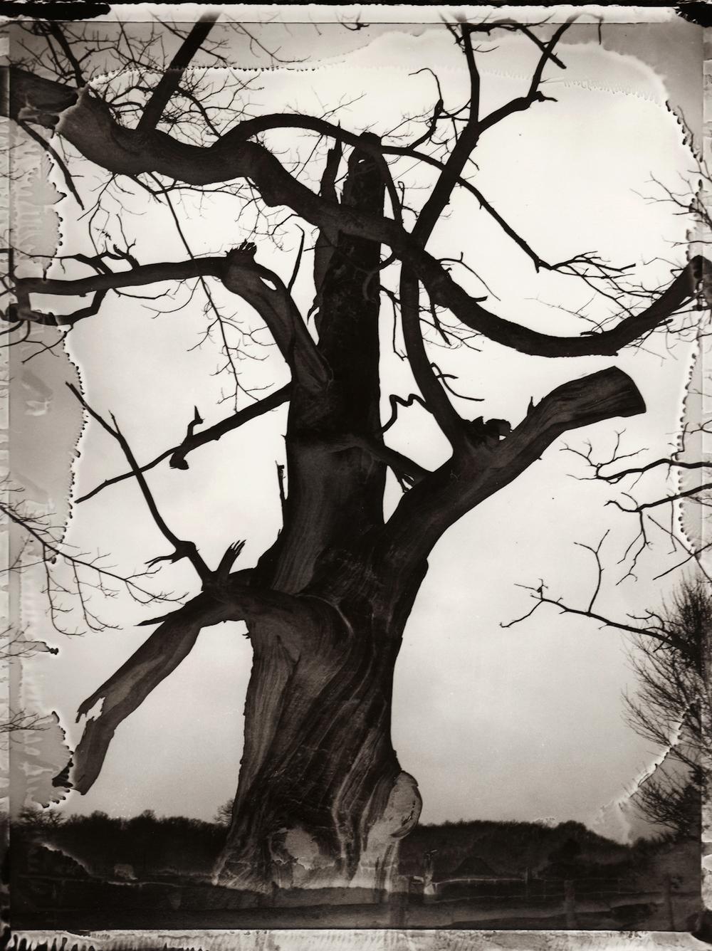 Pola-arbre 12.jpg