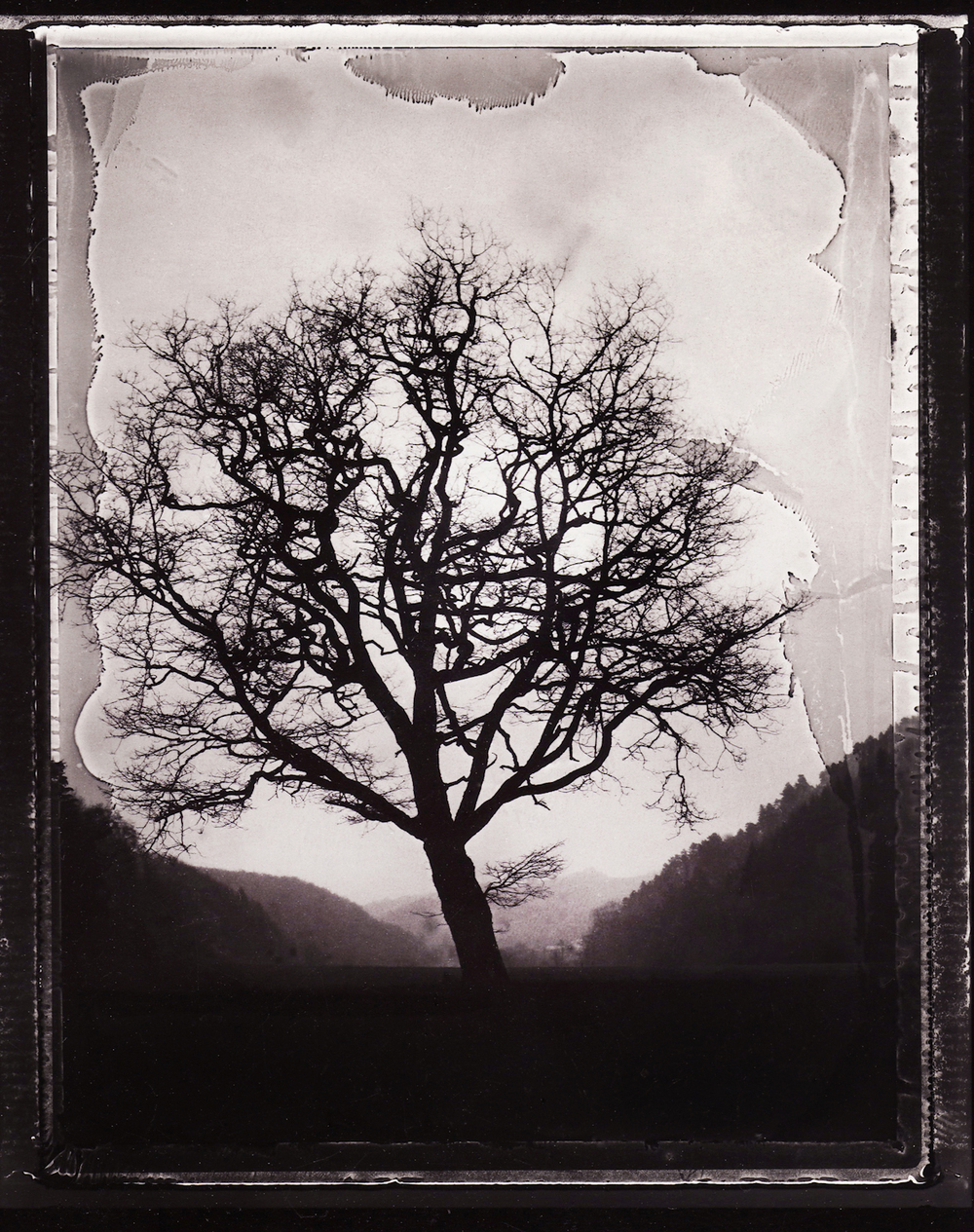 Pola-arbre 14.jpg