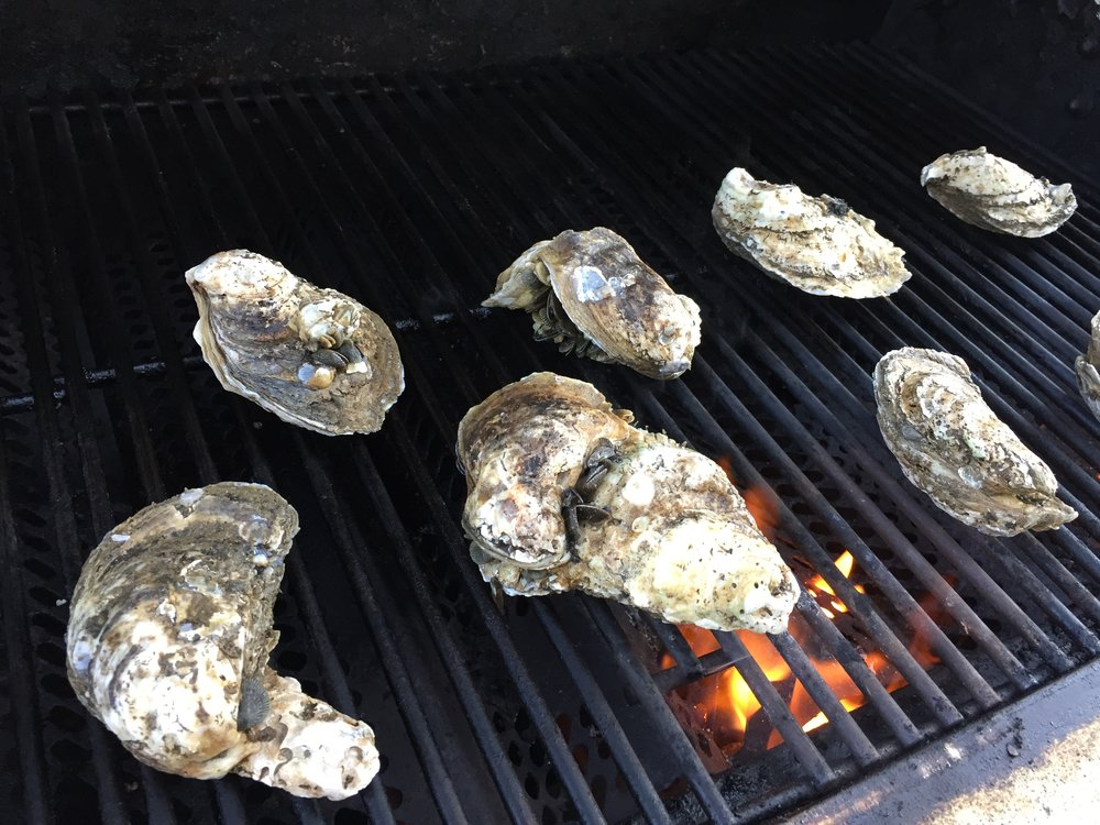 Grilling oysters...