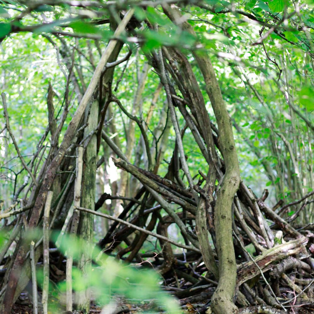 ForestExploration_Thumbnail-01.png