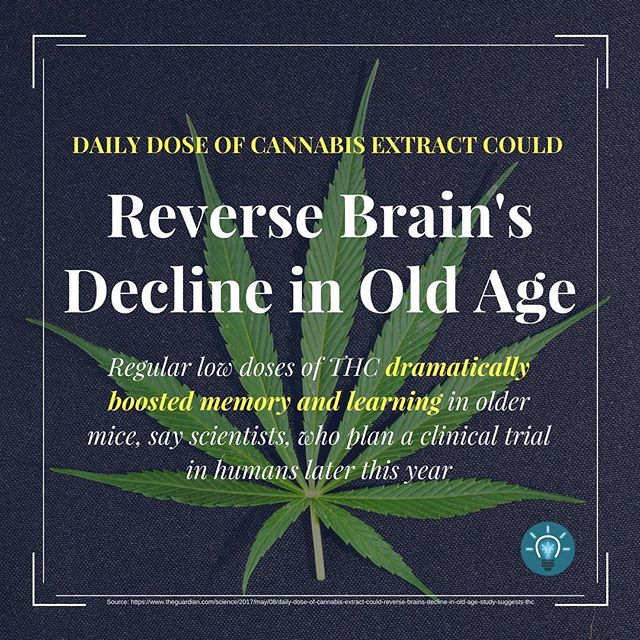 #dope #hemp #endthedrugwar #aging  #strains #ganja #mmj  #drugpolicy #legalizeit #love #cannabis #stonermeme #cannabiscommunity #contentmarketing #picoftheday #smoke #weedstagram #420 #legalize #maryjane #weed #blunt #infographic #infographics #smoking #senior #greenrush #pot #marijuanainfographics #weedhumor MarijuanaInfographics.com