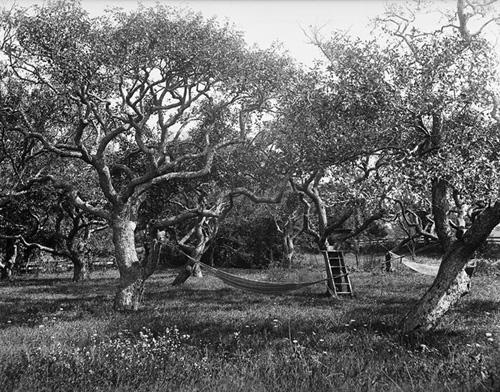 16. 1970.10.223 – Cobb Orchard