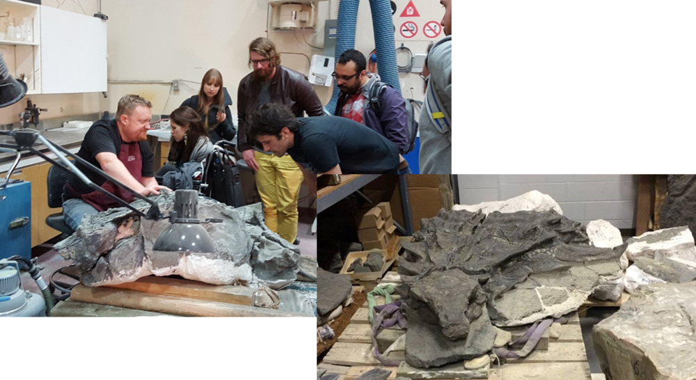 Left, Mark Mitchell being very patient with myself and some philosophy students from the University of Calgary. Right, the Nodosaur specimen, mid-prep.