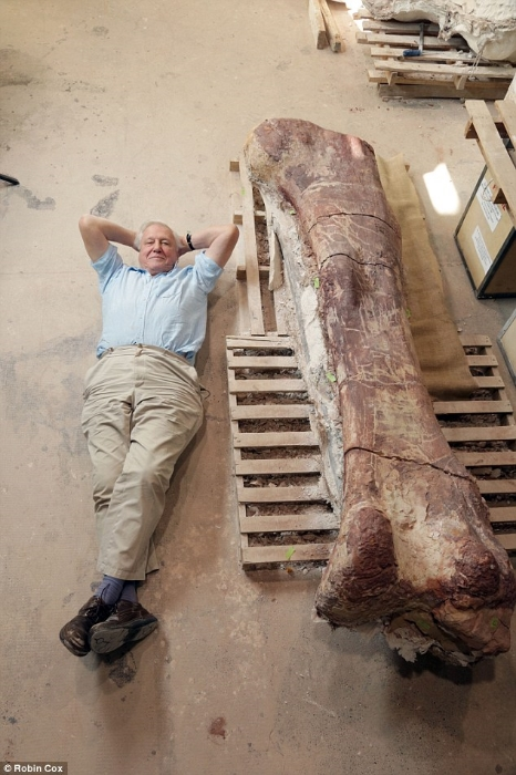 It is a truth universally acknowledged that if one is near a fossilized sauropod leg, one must lie next to it for a photo. Credit: Robin Cox.